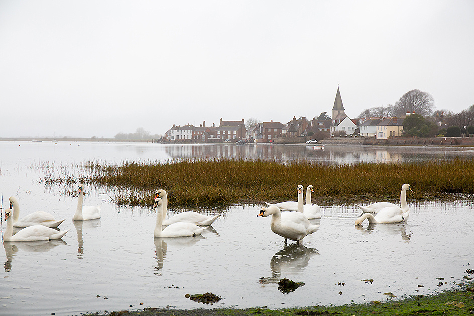 swans in Bosham at high tide