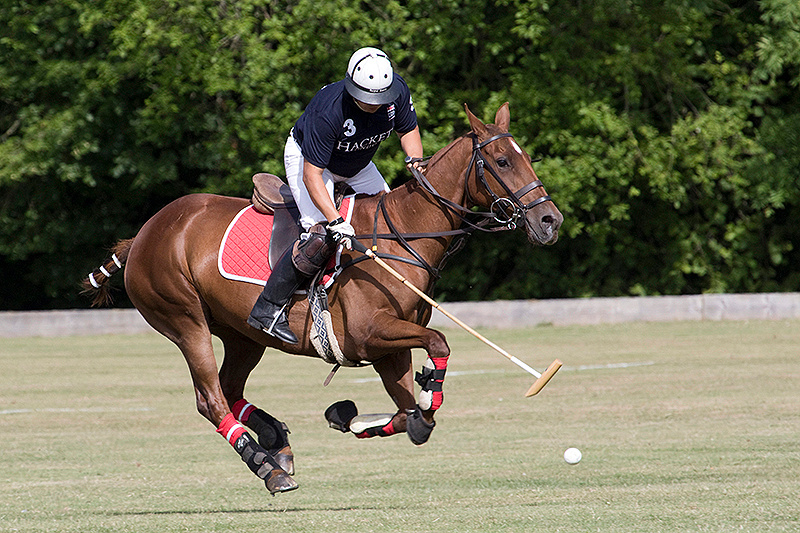 Polo playerhitting the ball at the gallop